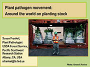 Plant pathogen movement: Around the world on planting stock