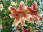 Starting a Native Plant Garden during a Drought