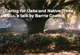 Caring for Oaks and Native Trees