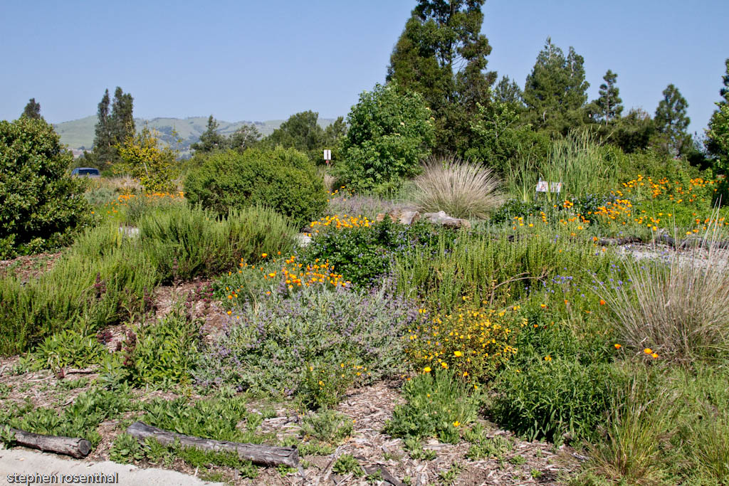 Lake Cunningham Native Garden