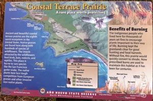 Display: Coastal Terrace Prarie: A rare place worth protecting