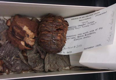 Fat specimens in a box