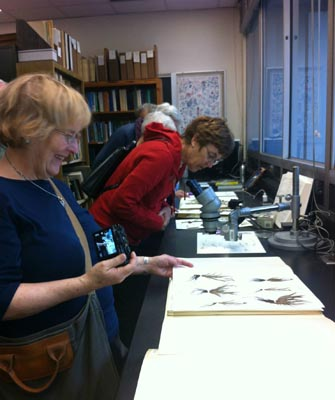 Two people examining herbarium sheets
