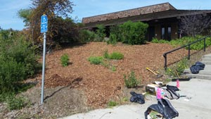 Mulched hillside: the workday after shot at Native Hill by Tom Lee