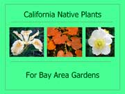 Native Plants for Bay Area Gardens